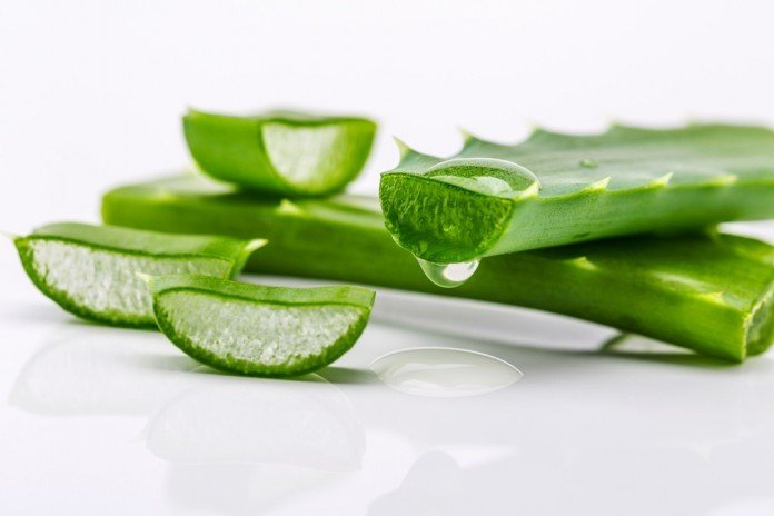 aloe vera heilpflanze vitaes das gesundheit magazin
