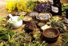 Heilpflanzen als Alternativmedizin - Anwendung und Wirkung