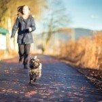 Hunde Gesundheit Bewegung Entspannung