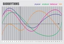 Natürlicher Biorhythmus Grafik