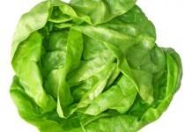 Kopfsalat Heilkraft Nahrungsmittel Gesundheit