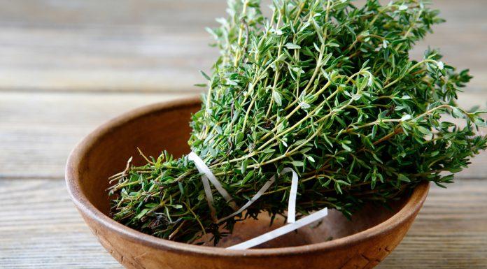 Thymian Heilkraft Heilpflanze Anwendung Nebenwirkungen Heilwirkung Pflanze