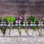 Heilpflanzen Heilkräuter Abnehmen Heilkraft Pflanzen